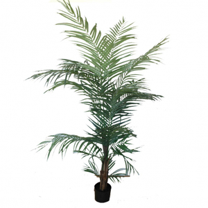 Areca 1,50 artificial